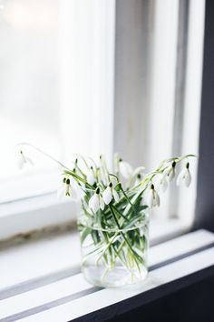 Takes from the flower diary: snowdrop (Suvi sur le vif)