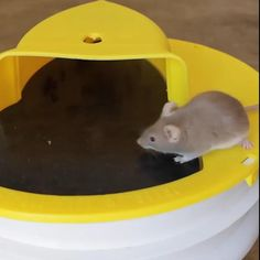 Catch the critters and keep your space pest free! Our Flip N Slide Bucket Lid Mouse Trap is easy to use and set up! It quickly catches rodents in a big bucket (not included) so you can remove them from your area. Diy Pest Control, Big Bucket, Rat Traps, Mouse Traps, Mouse Trap Diy, Cool Gadgets To Buy, Cool Inventions, Useful Life Hacks, Rodents