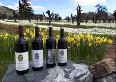 Sausal WInery in Alexander Valley is known for its incredible old vine zin (some vines are 134+ years old)