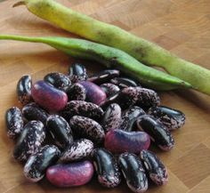 Scarlett runner beans, a bean worth drying. I have these guys climing our front porch and although its been too hot for them to set pods i'm hoping to harvest some in he fall to supplement our chili making this winter. yummo!