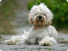 How to Train a Portuguese Water Dog