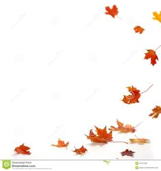 maple leaves falling down - Cerca con Google