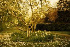 House & Garden (House and Garden)