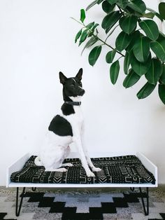 Pet Beds & Other DIY Projects You Can Make for Dogs | Most would work for cats too!