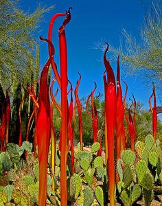 "Chihuly's ""The Nature of Glass"" exhibit with prickly pear cacti and palo verde trees in the Desert Botanical Garden of Phoenix by Walt K."