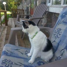 Ripley Cat | Pawshake Smiths falls