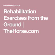 Rehabilitation Exercises from the Ground | TheHorse.com