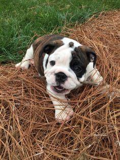 Lifes ruff, get a dog (60 Photos)