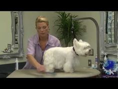 Grooming a Pet West Highland White Terrier with Courtney Ramstack