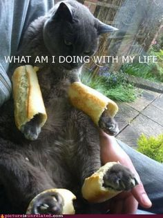 Cats: FML Breading Cat - What am I doing with my life