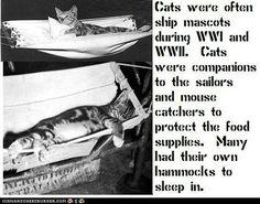 Cat mascots during WW1/WW2