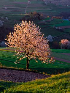 【山 Mountain】 Landscape photo and nature photo - Lightharmony Nature Pictures, Cool Pictures, Photographer Needed, Cherry Tree, Mountain Landscape, Landscape Photos, Macedonia, Trees To Plant, Slovenia