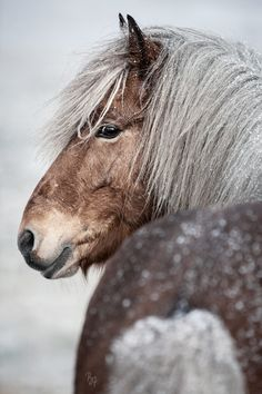 Pony Horse, Horse Head, Horses In Snow, Horse Adventure, What A Beautiful World, Horse Pictures, Horse Breeds, Beautiful Horses, Animaux