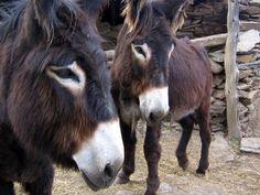 Miranda's donkey