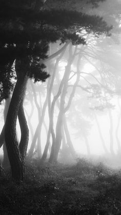 ideas black and white photography nature landscape mists for 2019 Tree Forest, Dark Forest, Foggy Forest, Forest Grove, Snow Forest, Misty Forest, Magical Forest, Tree Photography, Landscape Photography