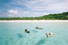 15 praias excêntricas para você considerar na sua próxima viagem   Nômades Digitais