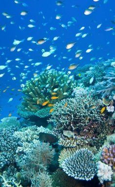 Nature is just showing off at these colorfully surreal destinations Great Barrier Reef, Australia Underwater Creatures, Ocean Creatures, Underwater World, Great Barrier Reef Australia, Arte Coral, Fauna Marina, Beautiful Sea Creatures, Beautiful Ocean, Exotic Fish