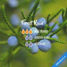 Forest Rain - Essential Oil Diffuser Blend