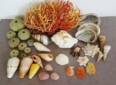 Buy Sea Shells & rare sea grass from Jeffreys Bay (cleaned handpicked) beach, driftwood, fish aqarium for Driftwood Fish, Sea Shells, Grass, Cleaning, Beach, The Beach, Seashells, Grasses, Beaches