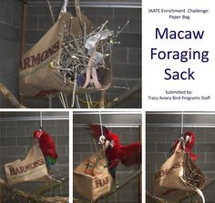 From Facebook: Enrichment Challenge Archives