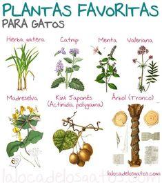 Plantas favoritas de los gatos
