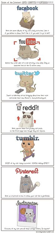 The state of the internet. With cats.