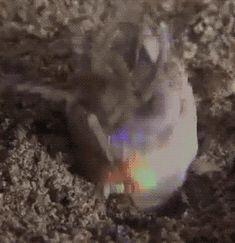 Bobbit worm - Imgur