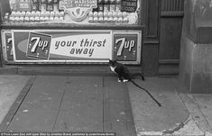 This is one of Brand's photos which does not contain and humans. It shows a cat urinating next to a dairy shop. A trickle of urine runs down the pavement from the cat which sits next to a 7up advertisement board on the front of the shop. In the window of the shop there is an advertisement for Dolly Madison ice cream as well as a sign offering salads and other foods