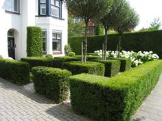 I love the block use of topiary in this front garden creating living walls.