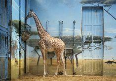 De Duitse fotograaf, Candida Höfer (°1944) legt de eigenaardigheid van dierentuinen vast door gevangenschap en escapisme met elkaar te verstrengelen. Zoologischer Garten Paris II, 1997 Angela Bowie, William Turner, Turner Contemporary, Contemporary Artists, John Baldessari, The Artist, Ludwig, Lomography, Paris
