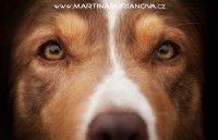 www.martinaburianova.cz Dogs - Border Collie