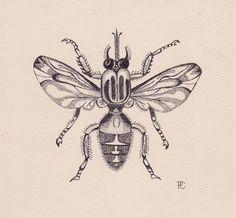 stippled fruit | stippling drawings | Fruit Fly Illustration by Stippling or ...