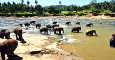 Visit Kandy Nuwara Eliya Colombo for 4 Days Tour Package - http://www.nitworldwideholidays.com/sri-lanka-tour-packages/sri-lanka-travel-package.html