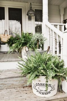 These ferns are perfect for my spring porch steps! These ferns are perfect for my spring porch steps! Front Porch Flowers, Small Front Porches, Farmhouse Front Porches, Decks And Porches, Small Patio, Front Porch Lights, Southern Front Porches, Summer Front Porches, Large Backyard