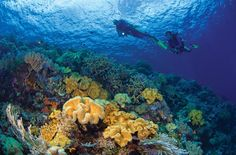 """Wakatobi is the name of an archipelago and regency located in an area of Sulawesi Tenggara (South Eastern), Indonesia. Home of the world's most pristine reefs, Wakatobi offers what many claim to be the """"best diving in the world. <3"""