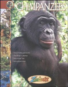 Chimpanzees - Zoobooks at theBIGzoo.com, an animal-themed superstore.