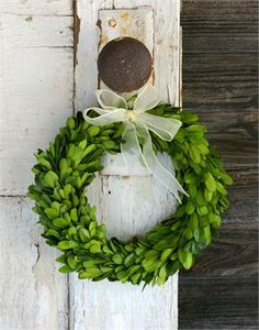 Preserved Boxwood Round Wreath – 8 Inch – Set of 3 – Boxwood Wreath İdeas. Christmas Time, Christmas Wreaths, Christmas Crafts, Christmas Decorations, Country Christmas, Door Wreaths, Grapevine Wreath, Ribbon Wreaths, Summer Wreath