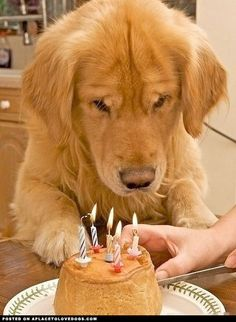 Birthday Dog - A Place to Love Dogs