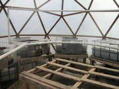 Geodesic dome greenhouse and IBC aquaponics