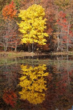 Yellow tree in the Catskills, New York. The Place to be! Artists, musicians, actors, actresses and the rich and famous love the Catskill's! Why aren't you here? Get your own! Call Upstate NY & Catskill's Real Estate & Land Expert. Kellie Place at Century 21 ~ 607-434-5263 http://www.century21upstatenewyork.com/