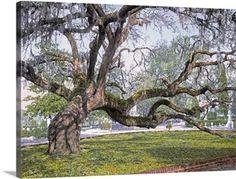 Wall Art Prints, Framed Prints, Canvas Prints, Big Canvas, Magnolia, Oak Tree Drawings, Tree Watercolor Painting, Painting Flowers, Live Oak Trees