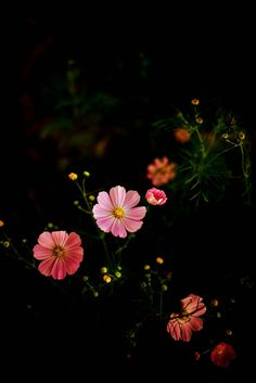 Martin saved to kaminzimmer- – Best Garden Plants And Planting Nature Iphone Wallpaper, Flower Phone Wallpaper, Cute Wallpaper Backgrounds, Flower Backgrounds, Cellphone Wallpaper, Trendy Wallpaper, Beautiful Flowers Wallpapers, Pretty Wallpapers, Flower Aesthetic