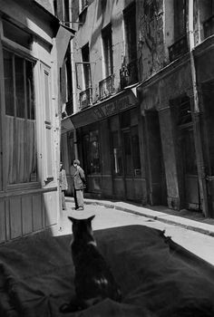 Cat in Paris 1952 Cartier-Bresson -repinned by Los Angeles County & Orange County studio photographer http://LinneaLenkus.com