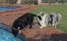 Dogs use teamwork to get ball out of the pool. more here http://artonsun.blogspot.com/2015/04/dogs-use-teamwork-to-get-ball-out-of.html