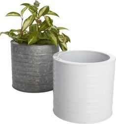 manufacturing plant.  Galvanized steel cylinder in grey or hi-gloss white plants small greens in industrial fashion.  Ridged, waterproof construction is sized to sit right on the table, indoors or out. Galvanized steelGrey or hi-gloss white powdercoat finishIndoor/outdoor useClean with damp clothMade in Vietnam.