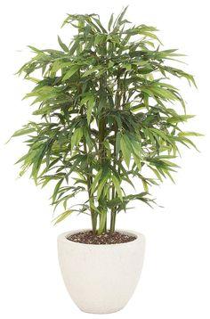 Artikeldetails:  Täuschend echter Bambus, Bestehend aus ca. 840 Blättern, Höhe: 195 cm,  Material/Qualität:  Kunststoff, Topf aus Keramik,  ...