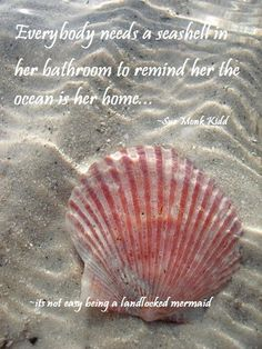 look leigh-la, a beautiful pink shell at the ocean.you would love to see this, and wiggle your toes in the warm sand . a nice you and i will have so wonderful and peaceful. I Love The Beach, Am Meer, Ocean Life, Ocean Beach, Beach Walk, Marine Life, Sea Creatures, Under The Sea, Starfish