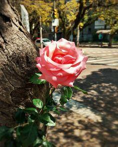 Não gosto de fotos de flores mas essa sozinha na árvore estava pedindo.