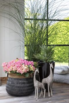 Hortensia og prydgress kan gi et vakkert inngangsparti. Garden Inspiration, Bra, Plants, Home Decor, Summer, Homemade Home Decor, Bra Tops, Flora, Plant