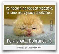 Demotywatory / Memy potworek.com Good Night Friends Images, Dankest Memes, Jokes, Weekend Humor, Funny Mems, Motto, Good To Know, Good Morning, Haha